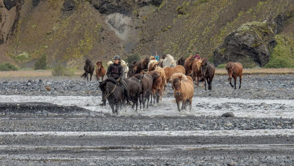 Þórsmörk horseback riding tour