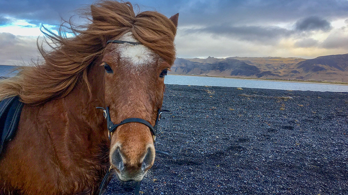 Horseback Riding Tour To The Black Sand Beach In South Iceland